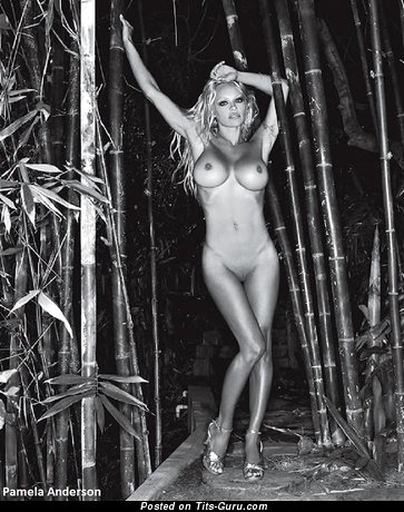 Image. Pamela Anderson - beautiful woman with big fake boobs photo